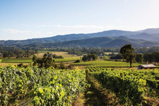 King Valley